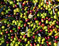 Olives – Refrigerated